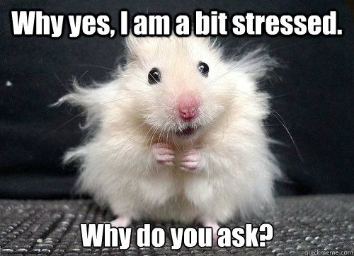stressed out hamster